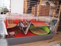 Cage-pour-lapins-et-cobayes---Rabbit-100cm_de_Juliette_41755625558669f79268fd3.78467089