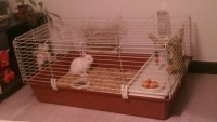 Cage-pour-rongeurs-Rabbit-100_de_Cedric_2091104554531e2d4705bf64.29925092
