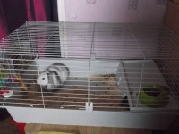 Cage-pour-rongeurs-Rabbit-100cm_de_Patricia_154288666755c1d6058e75a3.72659461