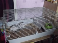 Cage-pour-rongeurs-Rabbit-100cm_de_Patricia_210224737155c1d5eced2b66.75441515