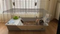 Jaula-para-roedores-Rabbit-100-cm--_de_Paula_14660725695cca9c5323a574.81033132