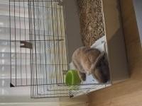 Jaula-para-roedores-Rabbit-100-cm--_de_Paula_16646372565cca9c5e870157.62488296
