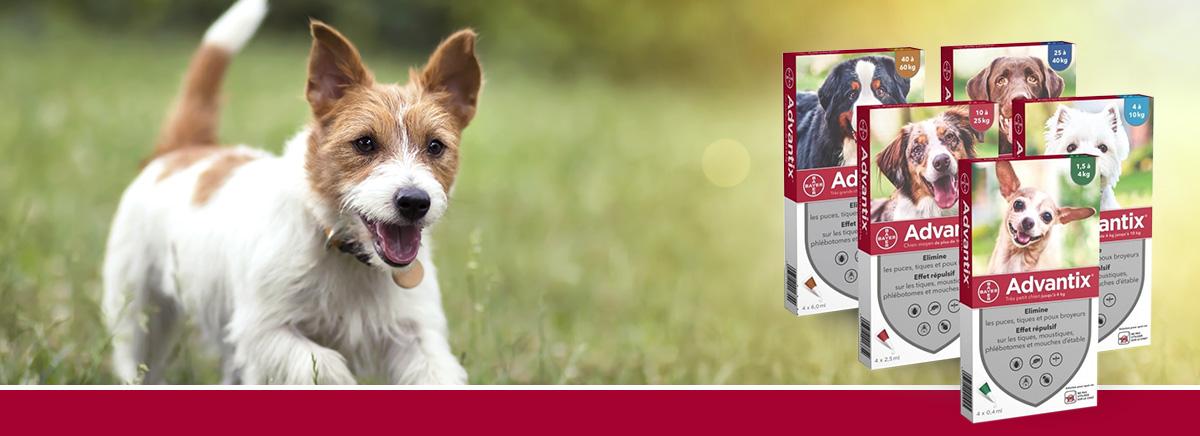 pipettes pour chien advantix anti parasites