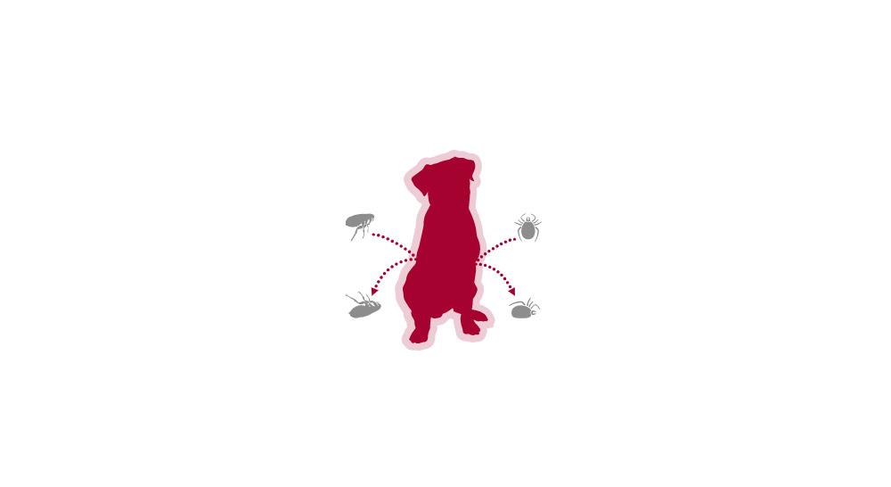 advantix pour chiens pipettes action immédiate