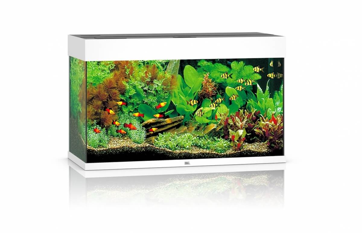 juwel aquarium rio led blanc aquarium et meuble. Black Bedroom Furniture Sets. Home Design Ideas