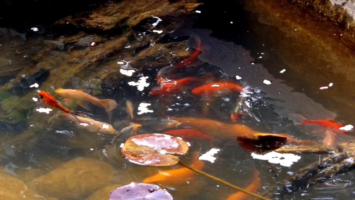 Superfish color sticks comida para peces alimento para for Comida peces estanque