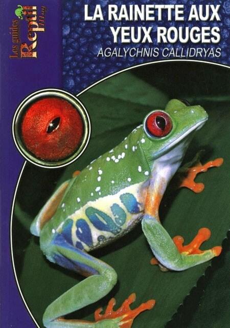 la rainette aux yeux rouges - Agalychnys callidryas