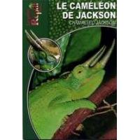 Le caméléon de Jackson
