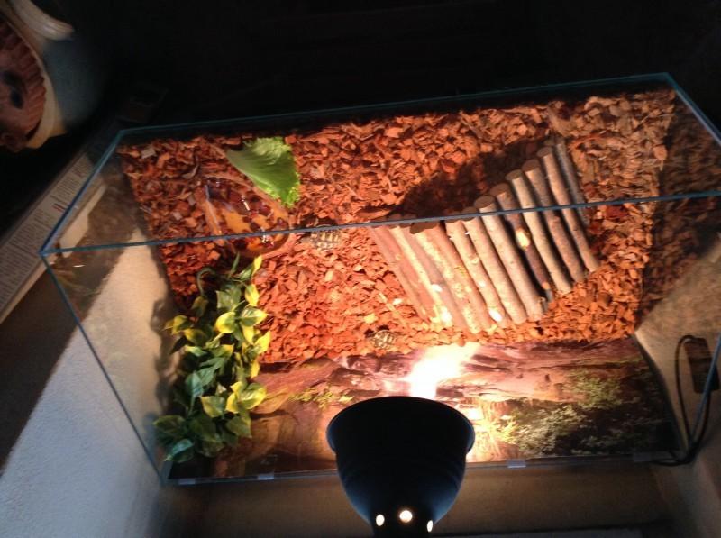kit complet terrarium naturel pour tortue de terre