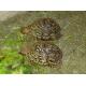 13192_Sera-Reptil-Professional-Herbivore-Aliment-pour-reptiles-herbivores_de_Corinne_17645764245eac61f4e56ec6.14363916