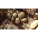 13195_Sera-Raffy-Mineral-Complément-énergétique-pour-reptiles_de_Michel_124409368159e9c0259b37d4.93072272