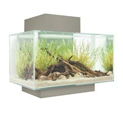 aquarium fluval edge 23 l glossy aquarium et meuble. Black Bedroom Furniture Sets. Home Design Ideas