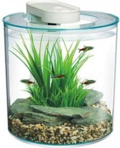 Aquarium 10 litres aquarium 10 litre sur enperdresonlapin for Aquarium 30 litres pas cher