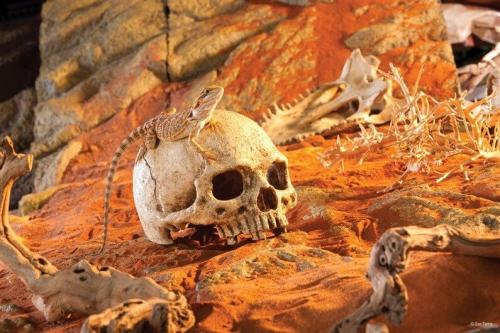 Décor pour reptiles Cachette en forme de crâne Primate _1