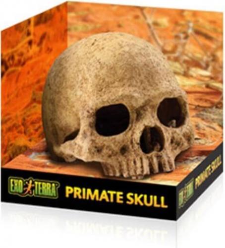 Décor pour reptiles Cachette en forme de crâne Primate _2
