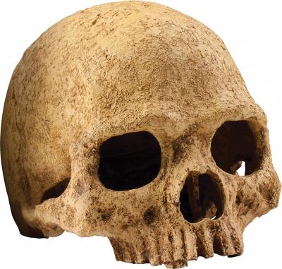 Decoración para reptiles Escondite en forma de cráneo Primate