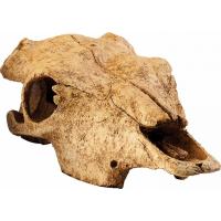 Escondite en forma de cráneo de Bisonte