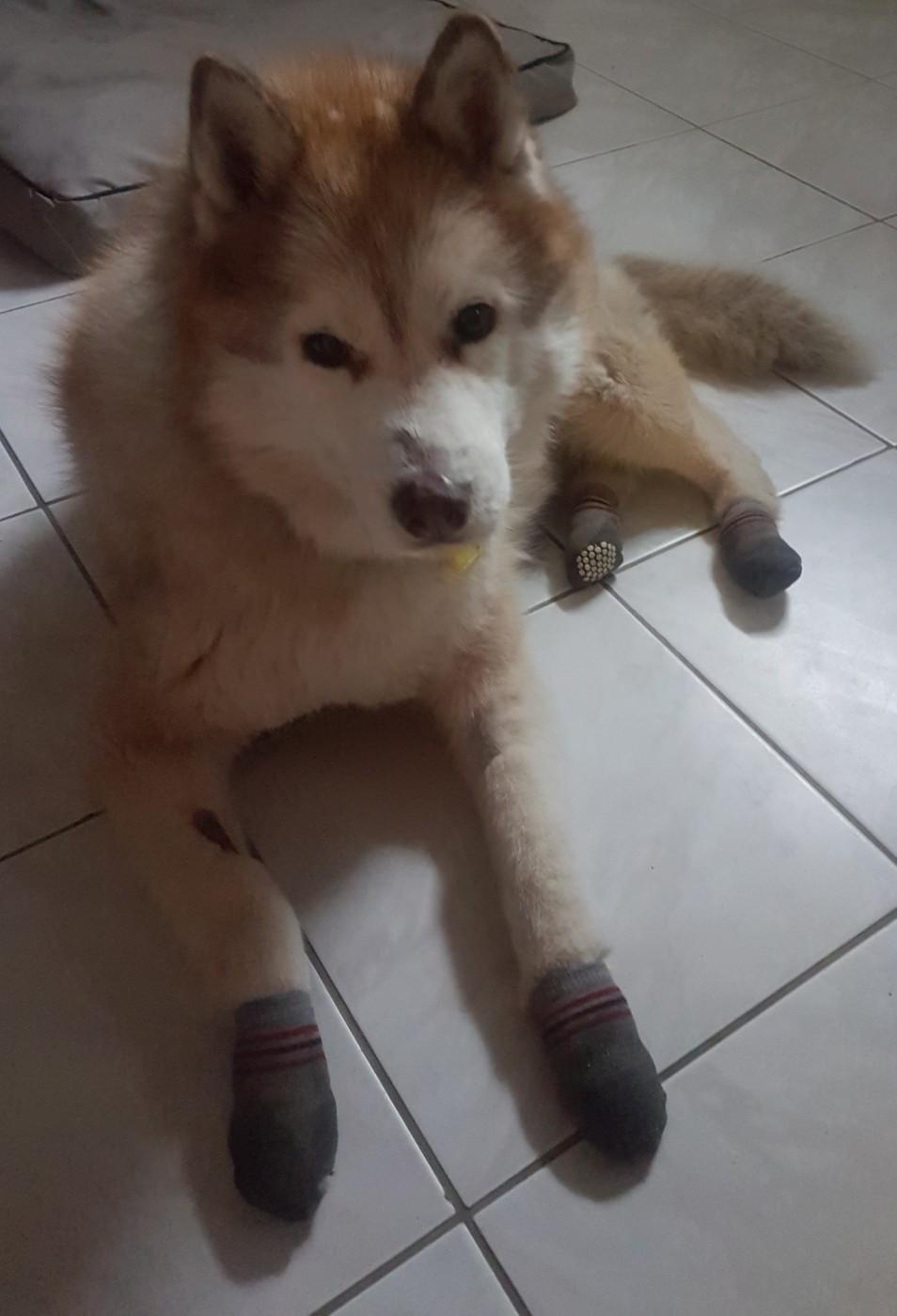 Bruit Griffe Chien Parquet avis sur chaussettes pour chien anti-dérapantes (par 2)