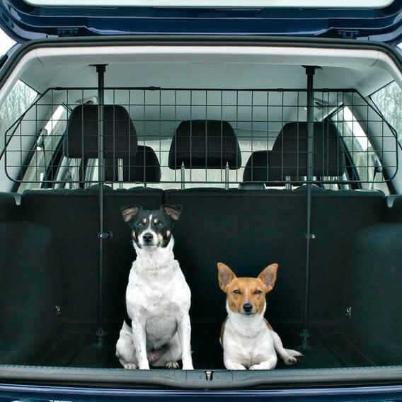 Separation voiture chien