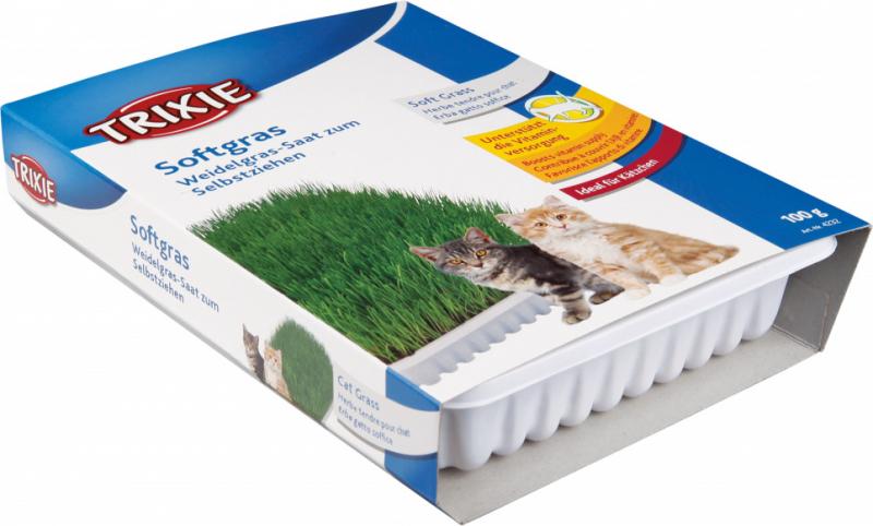 Herbe à chat tendre en bac et sachet pour chatons et chats