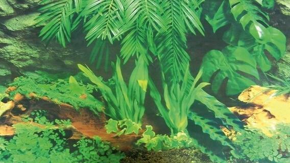 Fond décor de terrarium motif écorce et jungle