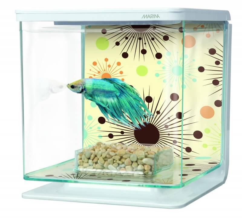 déco aquarium betta