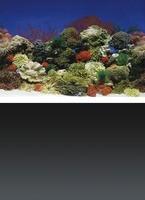 Décor Poster de fond Red Coral/Black pour aquarium