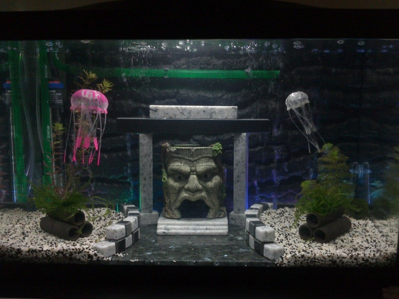 Avis sur diffuseur de bulles avec leds superfish led bubble for Bulleur pour aquarium