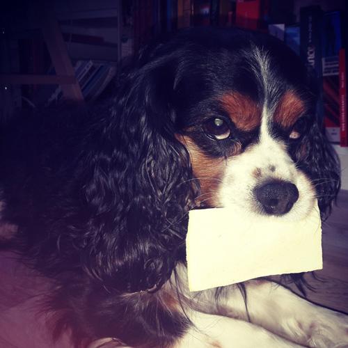 avis corinne proxym lamelles chiens