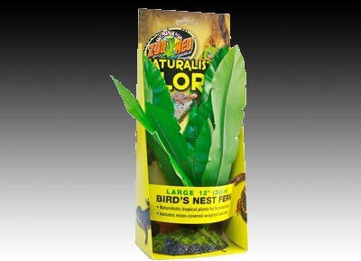 Pflanze Birds nest