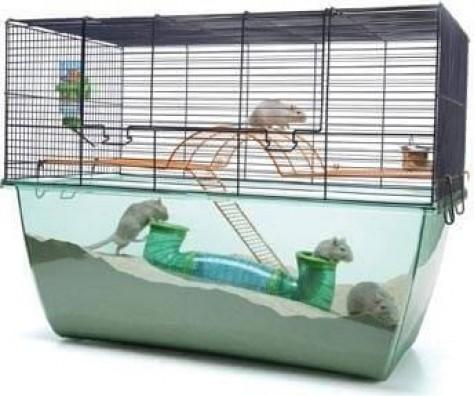 Cage gerbille et hamster Habitat XL