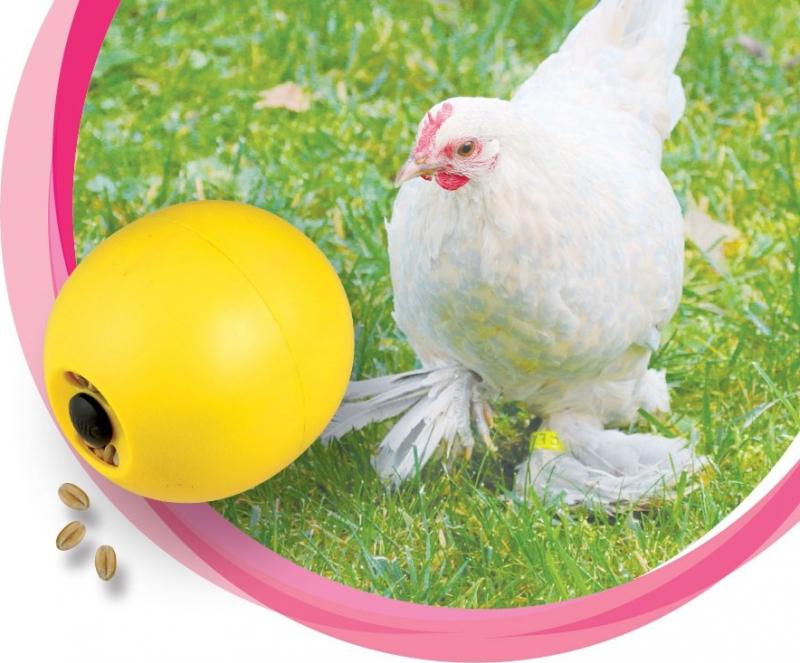 Pelota de comida para aves