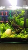 Aquarium-NanoCube-Complete-Plus-20L-et-60-L_de_Cedric_173605593557c952cfd57133.65725797