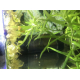 15399_Dennerle-Nano-Clean-Filtre-interne-d'angle-pour-mini-aquariums_de_Bastien_2900534095e8b13a2f18473.62890651