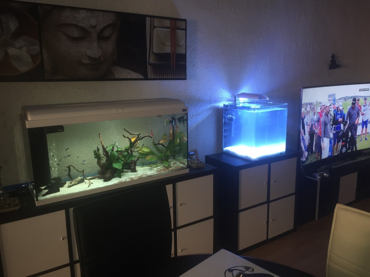 aquariums nano marinus cube 60 aquarium et meuble. Black Bedroom Furniture Sets. Home Design Ideas