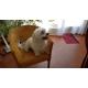 15779_Hill's-Science-Plan-Canine-Mature-Adult-7+-Light-croquettes-pour-chien-adulte-de-petite-taille-au-poulet_de_Martine_1726164538613484a3e58249.40045654