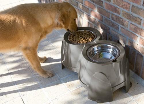 Ergo Feeder - Gamelles pour chiens qui souffrent d'arthrite _1
