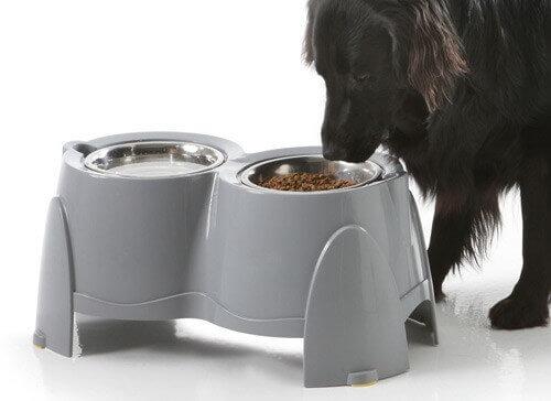 Ergo Feeder - Gamelles pour chiens qui souffrent d'arthrite _0