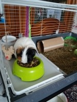 16090_Versele-Laga-Cavia-Complete-pour-cobayes_de_Marie-Jeanne_15452277535c499abed14158.09412406