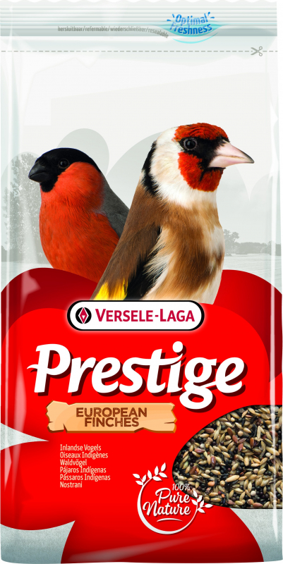 European finches Prestige Oiseaux européens