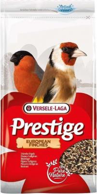 Europäische Finken - Europäische Vögel