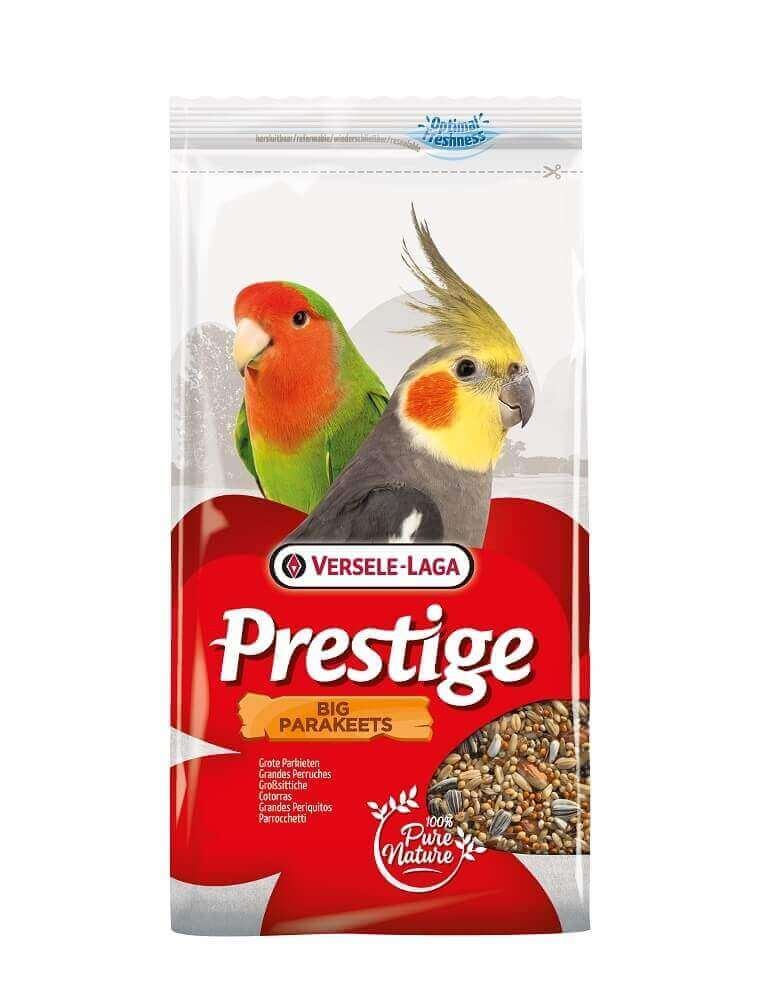 Big Parakeets Prestige Grandes Perruches_1