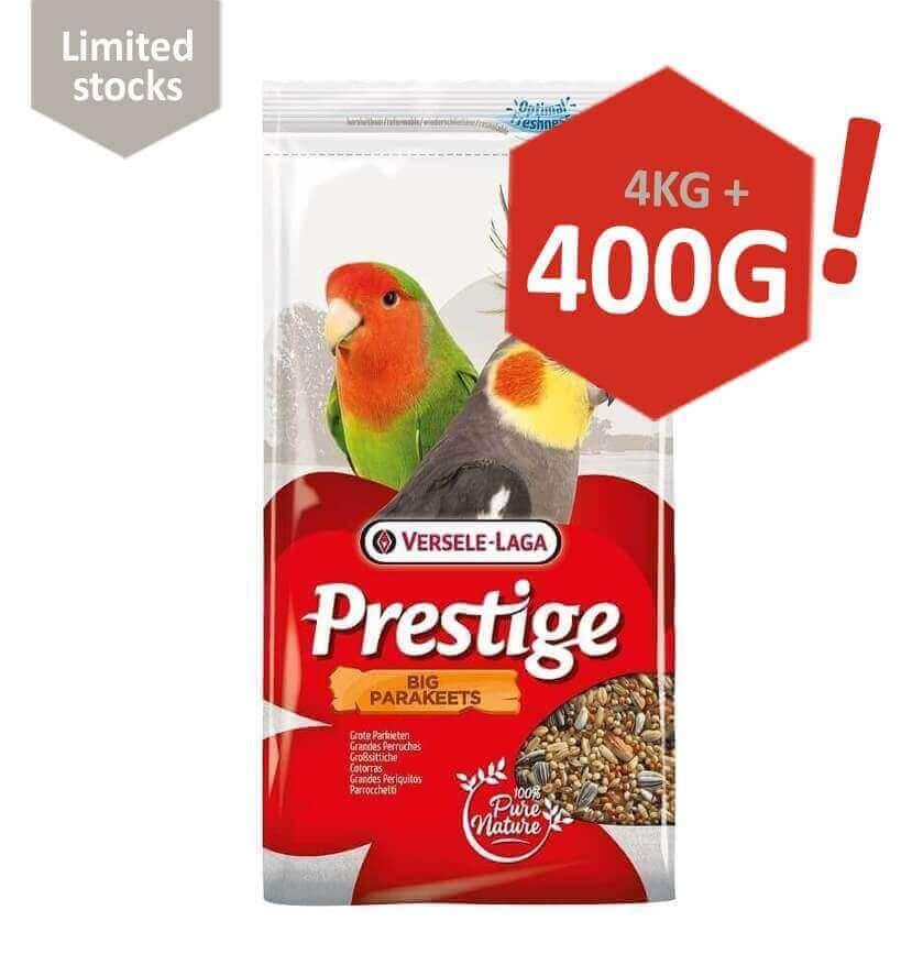 Big Parakeets Prestige Grandes Perruches_0