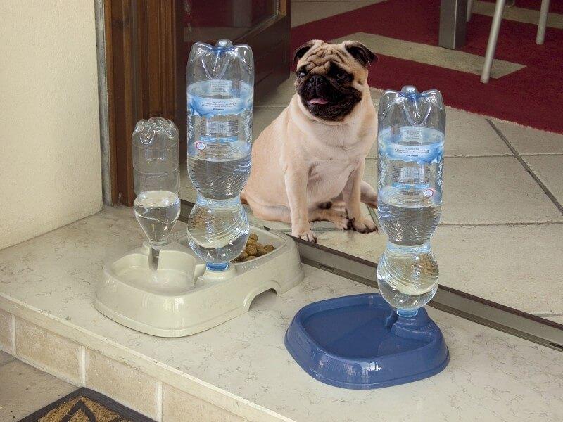TOTA 2 - Comedero y sifón para botellas de agua _1