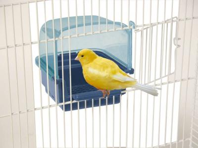 Mangeoire pour petits oiseaux Neva