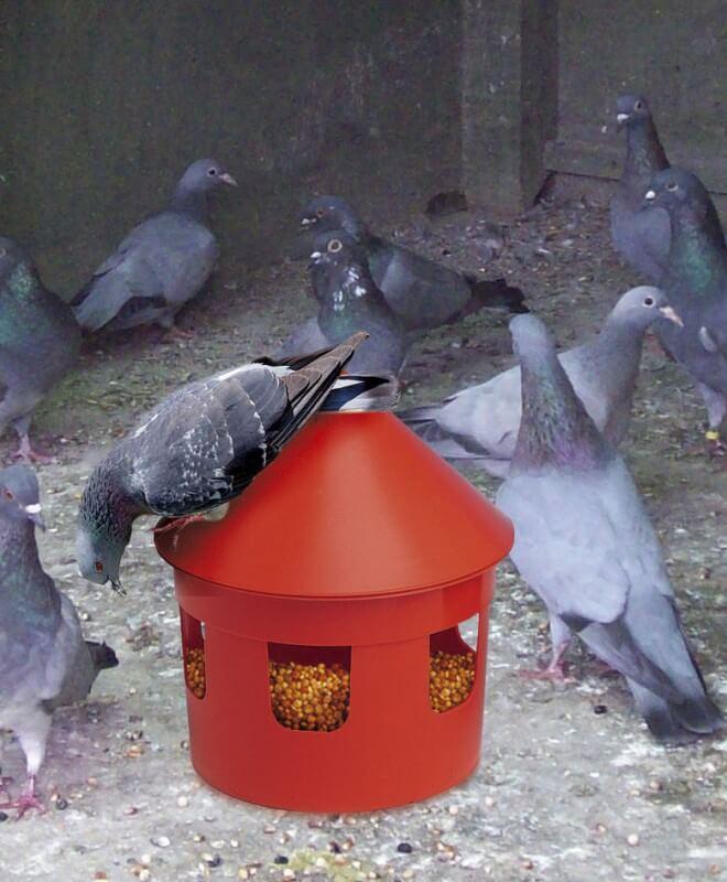 mangeoire et siphon rouge pour pigeons locri mangeoires et siphons pour pigeons. Black Bedroom Furniture Sets. Home Design Ideas