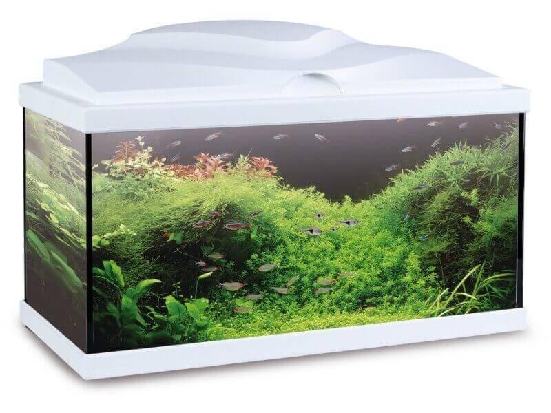 aquarium aqua 60 light blanc 48l tout quip aquarium de. Black Bedroom Furniture Sets. Home Design Ideas