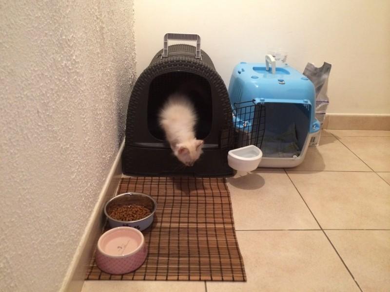 a3cf6c62dfce93 Avis sur Maison de toilette pour chat anthracite - aspect rotin ...