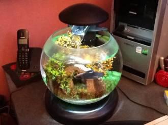 17215_Tetra-Cascade-Globe-6.8L---Cascade-Globe-–-Un-aquarium-filtré-facile-à-installer-et-à-entretenir_de_Emilie_402530837544a14d9bc0f08.39977309