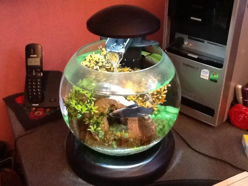 Avis sur tetra cascade globe noir ou blanc for Filtre aquarium rond